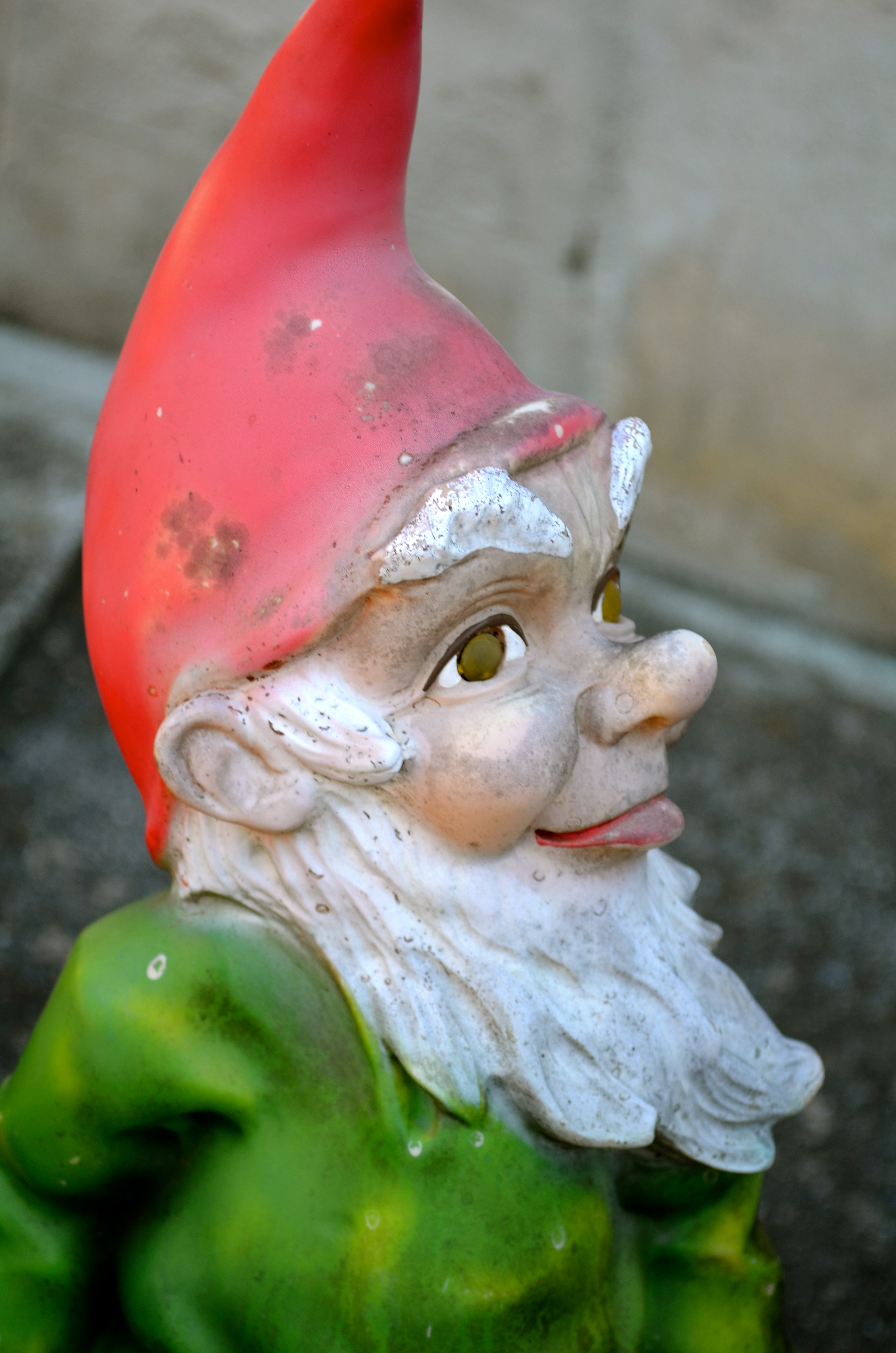 Gnome Garden: Gnome Sweet Gnome, We're Living In The Land Of Gnomes